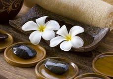 White frangipani with zen stone Stock Image