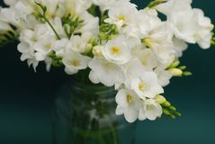 White Freesia Bouquet of Flowers in Glass Vase on Black Background. close up. Royalty Free Stock Photography