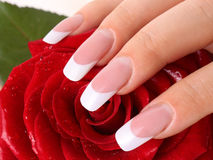 White french.. Woman's hand with white french  holding red rose Royalty Free Stock Photo