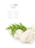 White fresh champignon mushroom with herbs, sample text Stock Images