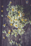 White and fresh flower camomile on a wooden old background Stock Photography