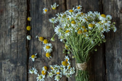 White and fresh flower camomile on a wooden old background Royalty Free Stock Images