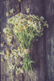 White and fresh flower camomile on a wooden old background Royalty Free Stock Image