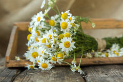 White and fresh flower camomile on a wooden old background Royalty Free Stock Photo