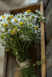 White and fresh flower camomile on a wooden old background Stock Image