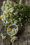 White and fresh flower camomile on a wooden old background Stock Photo