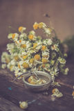 White and fresh flower camomile on a wooden old background Royalty Free Stock Photos