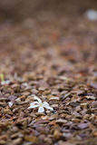 Petal on the ground. White freshly fallen petal lying on small rocks in the garden Stock Images