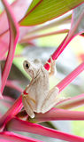 White Frog Stock Photography
