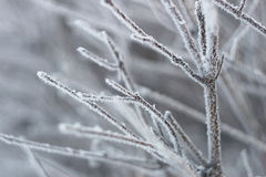 White frost Royalty Free Stock Photo