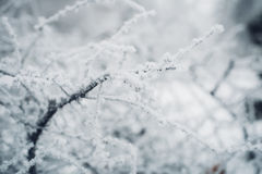 White frost on bare branches of tree in winter Royalty Free Stock Photography