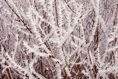 White frost covered branches Royalty Free Stock Photos