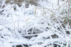 White frost covers green grass Royalty Free Stock Photo