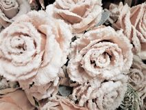 Pink roses covered with white frost stock image