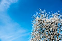 White frost on tree branches on blue sky background in winter. Frozen tree stock photo