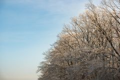 White frost on tree branches on blue sky background in winter. Frozen tree stock photography
