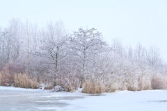 White frost on trees Royalty Free Stock Images