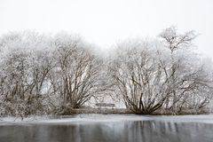 White frozen trees in a desolate Amsterdamse Bos. White frozen and teatrical trees on the edge of a frozen ditch in a desolate Amsterdamse Bos in the royalty free stock photo