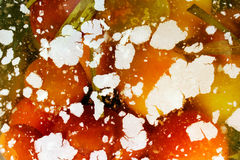 White fungi and mould float in brine with pickled tomatoes Stock Photos