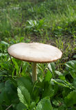 White fungus Stock Photo