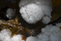 White fungus Royalty Free Stock Photos