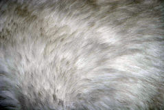 White fur Stock Images