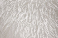 White Fur Royalty Free Stock Photo