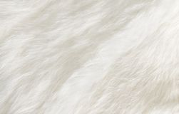 White fur Royalty Free Stock Photos