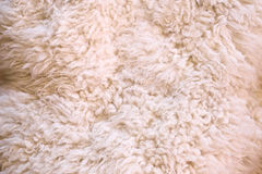 White fur as abstract background. Photo of white furry wool as abstract texture background top view Stock Image