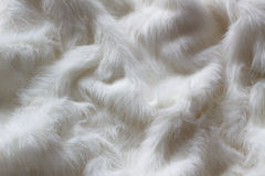 White fur as background or texture. Crumpled royalty free stock photo