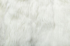 White fur background. Close-up. texture Royalty Free Stock Photo