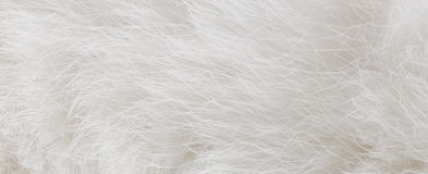 White fur Royalty Free Stock Photography