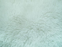 White fur background. Seeing a color and detail of hair is a beautiful Royalty Free Stock Photos