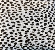 White fur with black spots like an animal Royalty Free Stock Photo