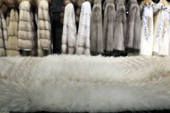 White fur Stock Photography