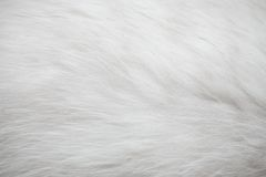 White fur texture background Royalty Free Stock Photo