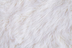 white carpet background. white fur texture stock images carpet background h