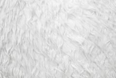 White fur texture closeup. As background for use in many purpose stock photography
