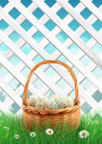 White garden fence with Easter basket grass and flowers, spring background Royalty Free Stock Photography