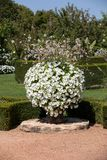 White garden in the picturesque Jardins du Manoir d Eyrignac in Dordogne. stock photography