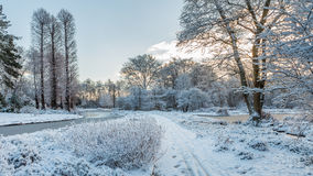 White garden scenery covered by freshly fallen snow Stock Photos