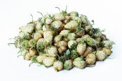 White garden strawberries Royalty Free Stock Photo