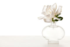 White Gardenia Blossom on Marble Table Stock Image