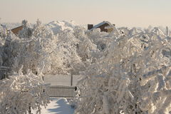 White gardens. Snow cover the village, frozen trees and bushes, houses in snow Stock Photography
