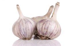 White garlic Royalty Free Stock Photo