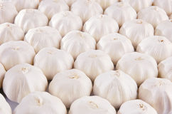 White garlic bulbs background. Background with lots of garlic bulbs royalty free stock photography