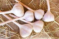 White garlic bulbs Royalty Free Stock Photo