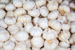 White garlic on the market. Fresh garlic harvested from the garden for sale. Royalty Free Stock Image