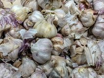 White garlic pile texture. Fresh garlic on market table closeup photo. Vitamin healthy food spice image. Spicy cooking ingredient. Picture. Pile of white garlic royalty free stock images