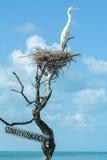 White Gauze on the nest at Isla de los Pajaros. In Holbox, Mexico Stock Photos